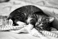 Funny kitten 1
