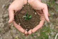 Handful of Dirt 1