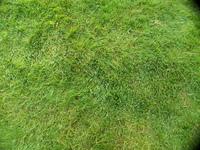 Grass with fisheye