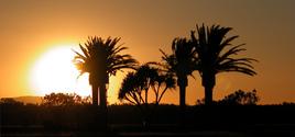 Palm Tree Sunset 2