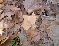Micro landscape 5 - Autumn