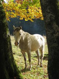 Pferd, Horse