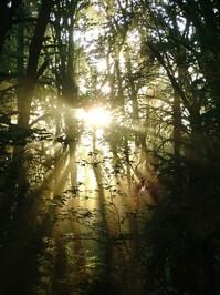 streaming sunlight 4