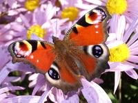 butterfly 3