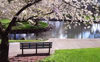 Park bench under Magnolia tree