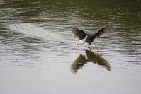 Birds on Water