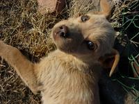 Puppy look 1