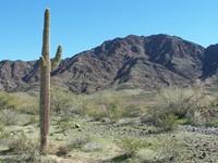ArizonaDesert 14