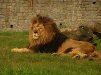 El rey toma un descanso