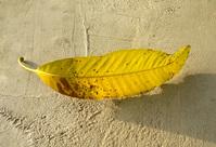 Yellow Leaf 2