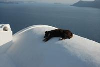Santorini Dogs 2
