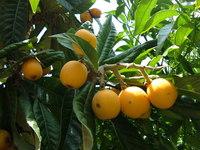 fruits yelow dots