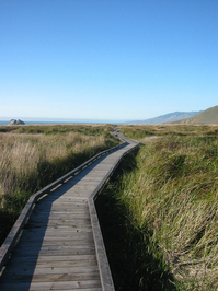 Hiking North of Bodega Bay
