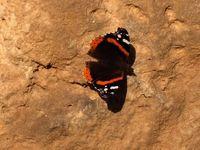 Butterfly on Mars