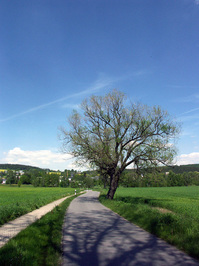 tree&street