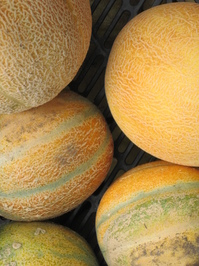 Melons For Sale! 2