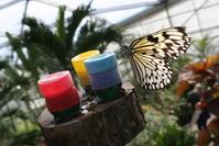 Lots of butterflies 15