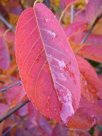 True leaves 3