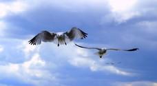 Bird Trio