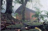 Cabana na Floresta