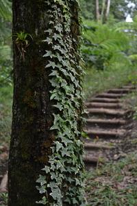Climbing plant