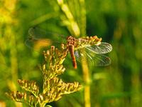 Glistening wings