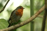 Indoor Robin