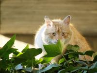 Sneaking cat