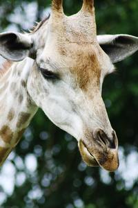 zoo animals 4