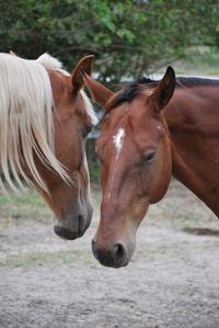 horses interacting 2