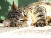 A cat's hard life 3