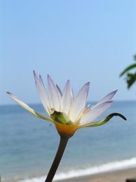 Bali memories 4