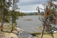 Idle Elk