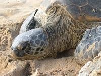 Turtles 4