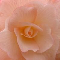 florescence 2