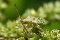 baby bug 1