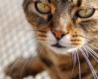 cat's eyes looking