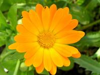 flowers wiht macro 2