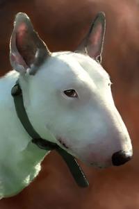 Bull Terrier Painting 1