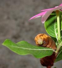 Caterpillars 1