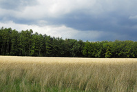 Ardennes 6