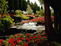 Flower Power Landscape