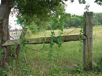 fence with vines