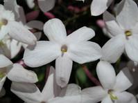 Flores y hojas 9