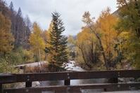Late Fall Stream in Colorado