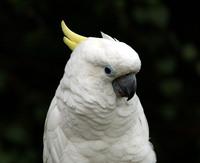 Birds of Paradise 5