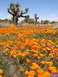 Spring in Desert 1