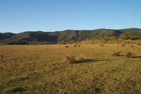 Bunya Mountains 2