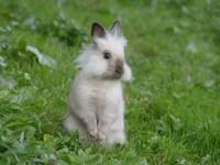 Rabbit - bubus