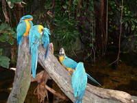 Beautiful Blue Birds